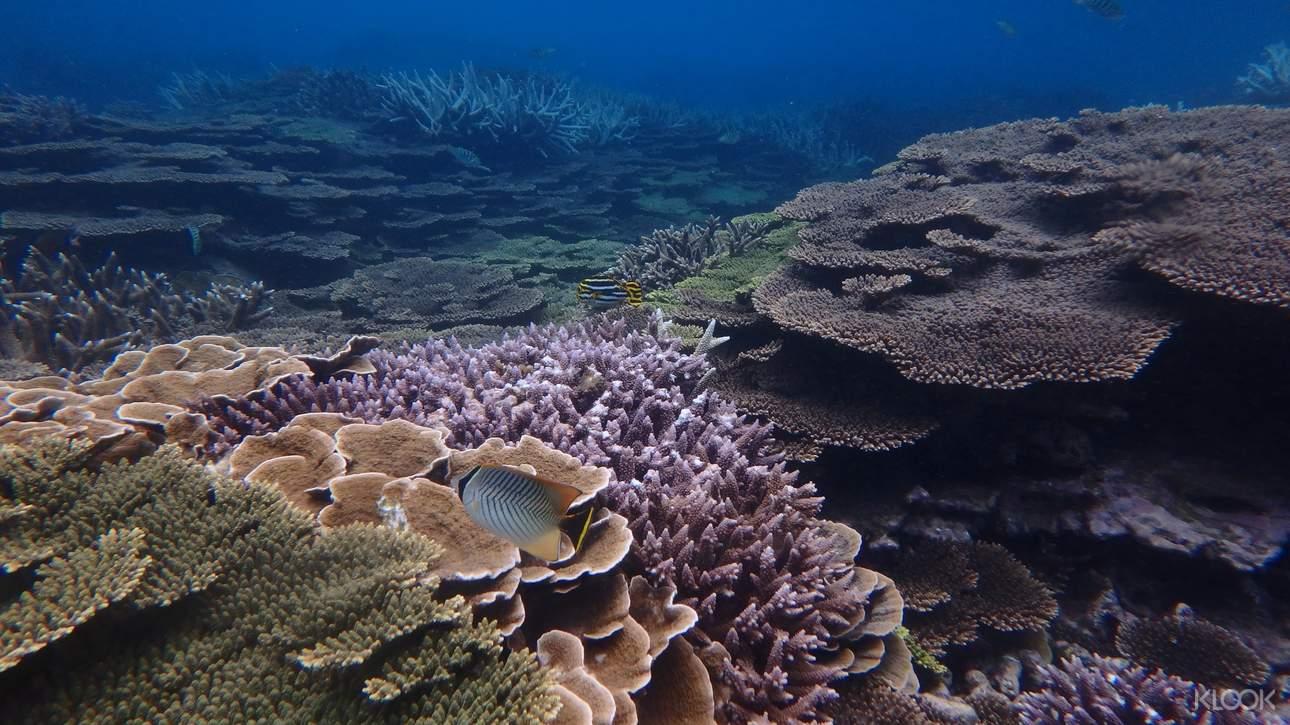 澎湖美麗的珊瑚礁群,帶給你大海的感動