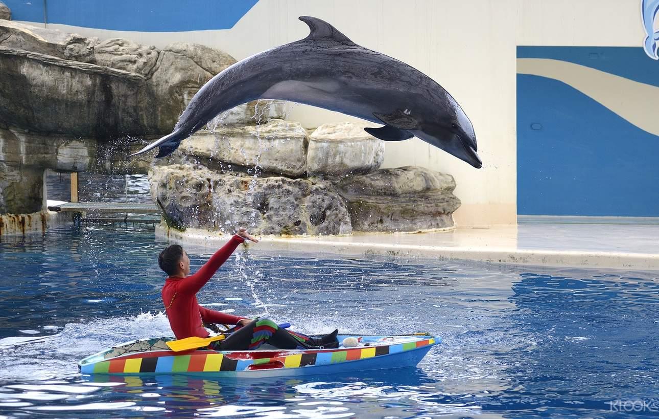 【海豚傳說 - 跳浪奇緣】帶你進入東海岸最古老的傳說故事「跳浪奇緣」中,與我們一起尋找傳說中的海豚精靈,發現海洋與我們之間密不可分的緣份