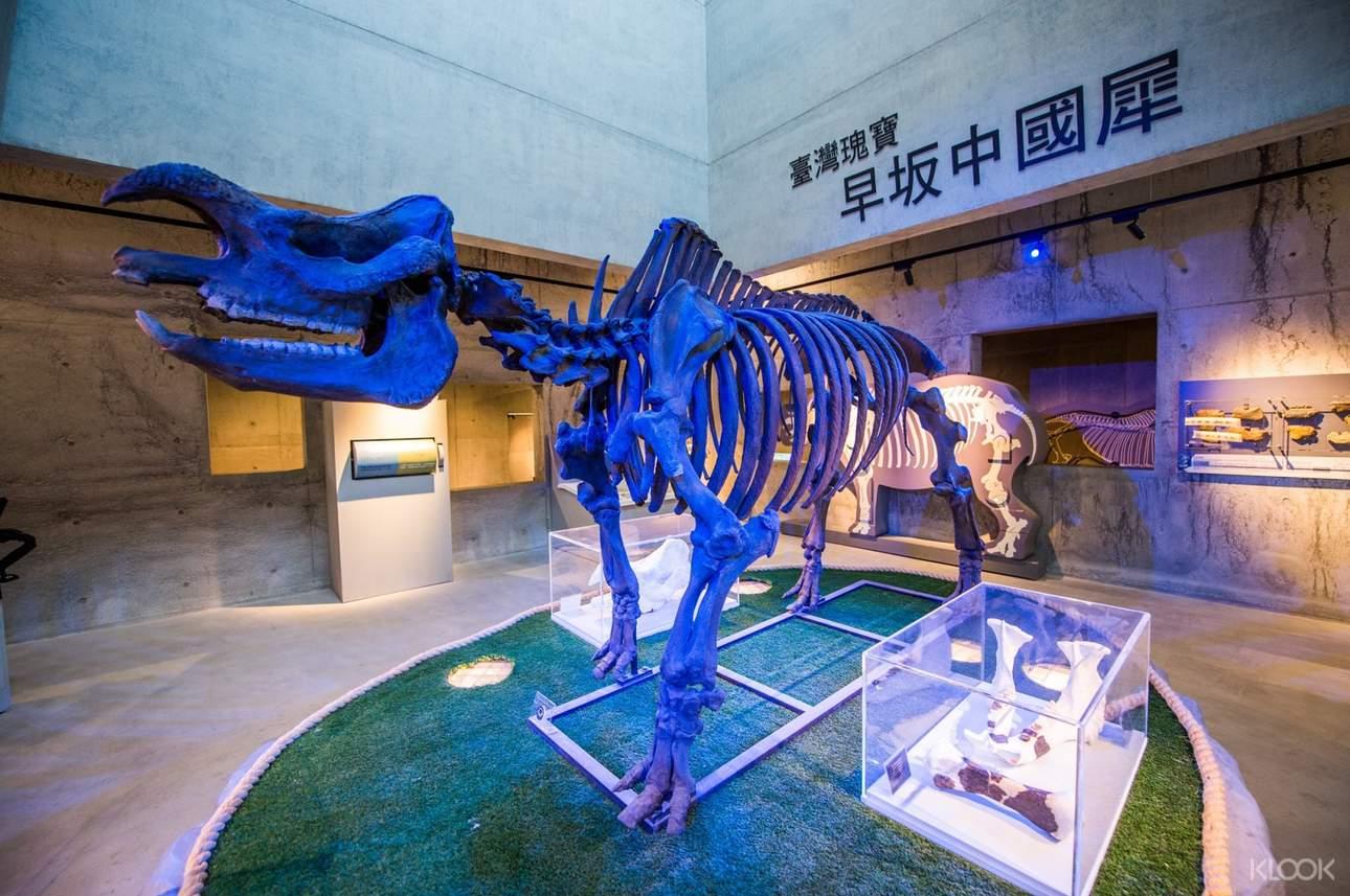 1971年化石愛好者潘常武先生從兩名學生的手上拿到犀牛牙齒,其後透過多方協助完成挖掘出土的工作,並將其命名為「早坂中國犀牛亞種」,生存在約距今90萬年前到45萬年前的帶刺雜林相環境中