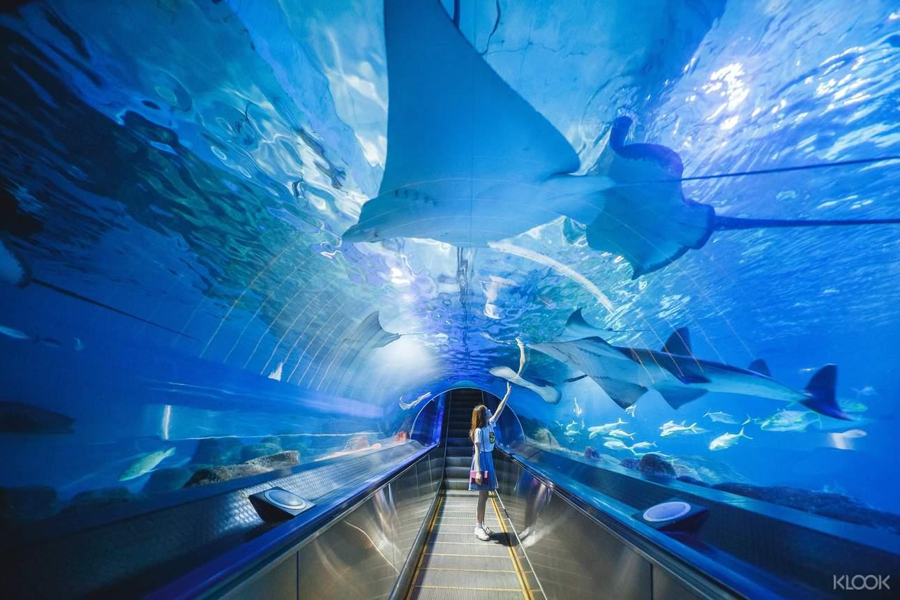 聽說探險島底下隱藏著一個神秘的海底隧道,裡面有著許多神秘的海底族群,採用最新水族館設計概念,展現多采多姿的海底世界!