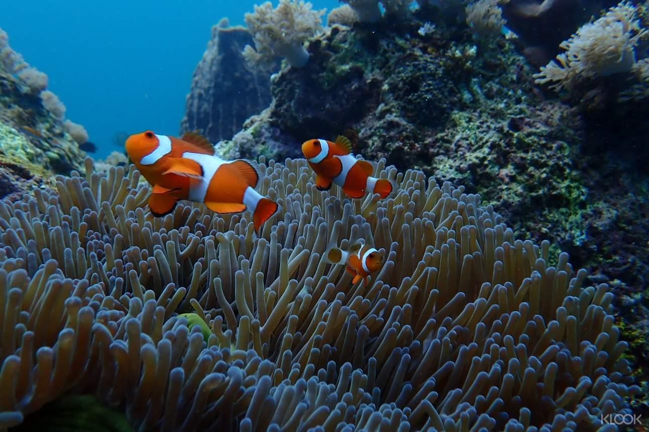 近距離接觸迷人的海洋生物