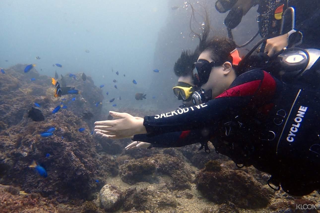 無需潛水執照也能悠遊海底世界