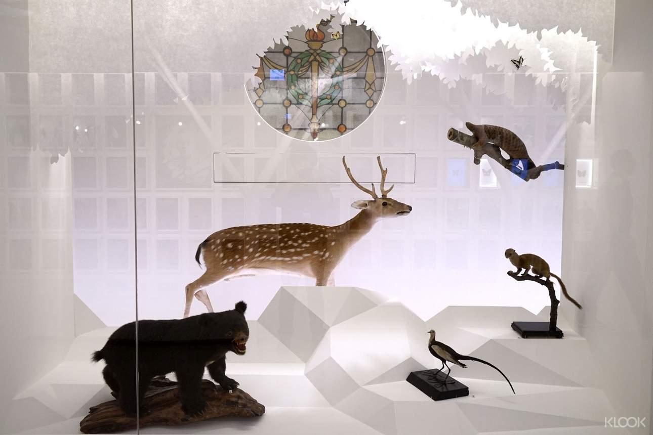 欣賞動物標本,宛如置身動物世界
