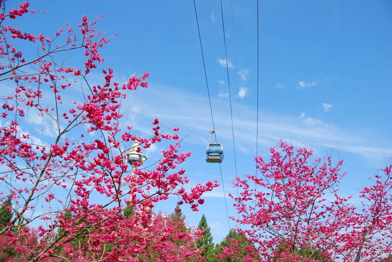 搭乘日月潭纜車,飽覽周遭絕美的自然風光
