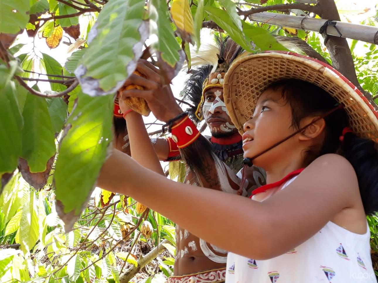 探索可可森林,認識可可樹的生長環境
