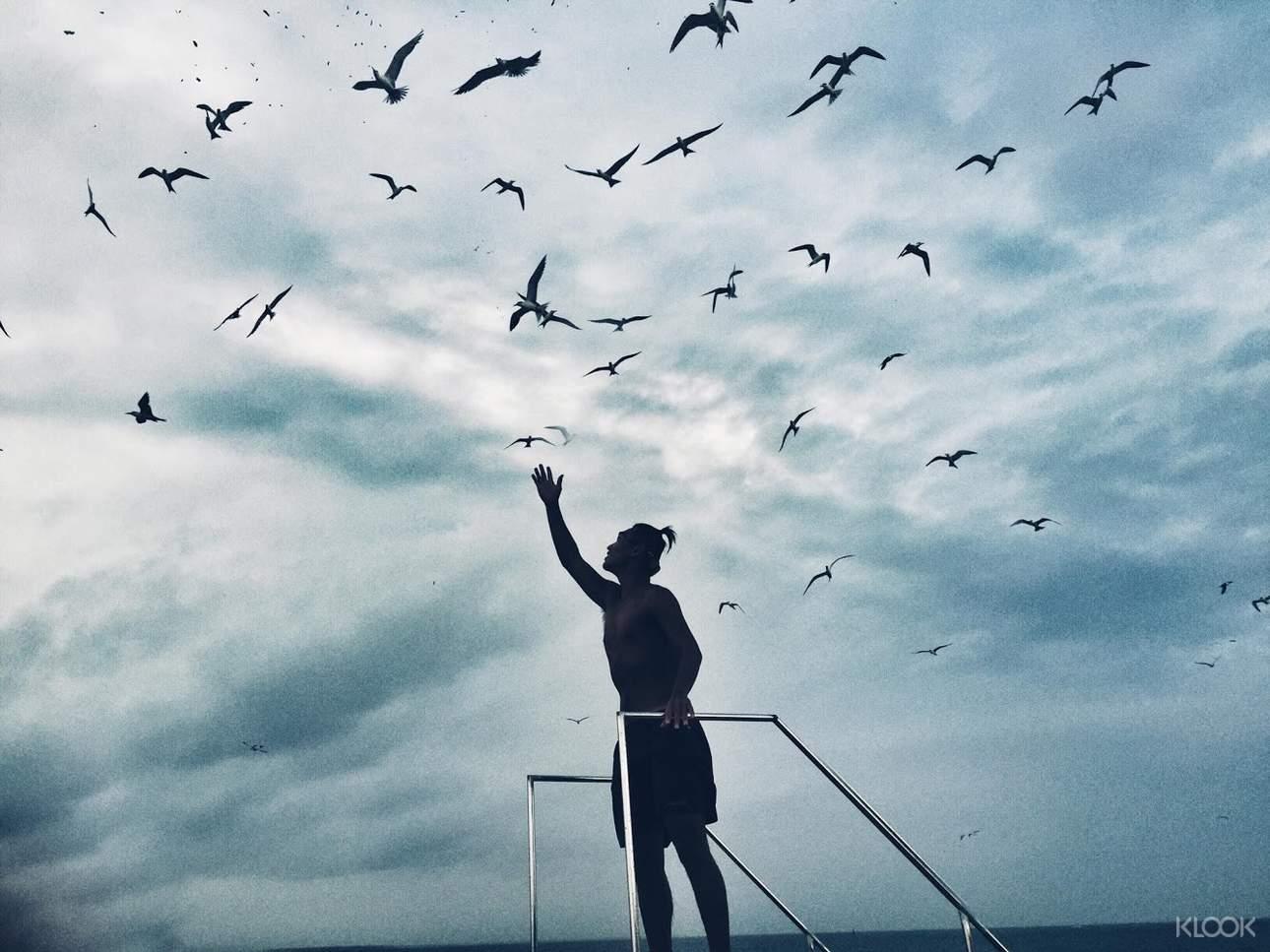 伸手餵食海鷗,體驗鳥群在身邊盤繞的新奇感受