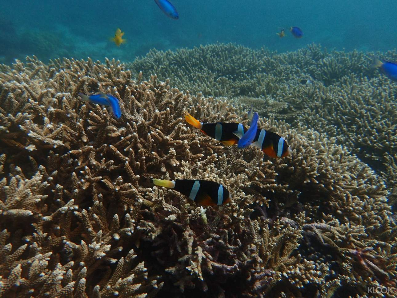 一睹不一樣的海底世界,感受色彩繽紛的海洋