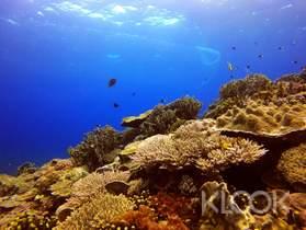 蘭嶼|浮潛體驗