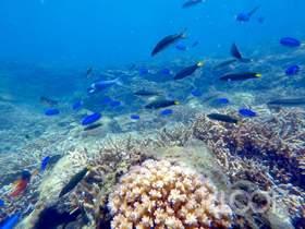現折TWD200|澎湖鎖港珊瑚復育區|波賽頓海底郵筒浮潛體驗
