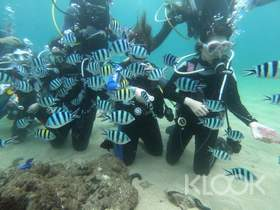 現折TWD100|澎湖|興仁潛水|體驗潛水|免證照