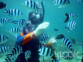 現折TWD250|澎湖|海底郵筒體驗潛水|免證照