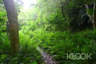 墾丁里德社區:欖仁溪生態溪床漫遊體驗