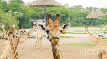 Private Bangkok Safari World and Grand Pearl Dinner Cruise Day Tour by AK