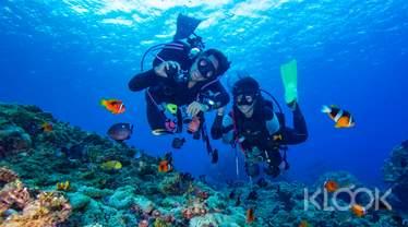 蘭嶼|潛水體驗 Fun Diving (需證照)