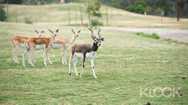 웨리비 오픈 레인지 동물원 입장권