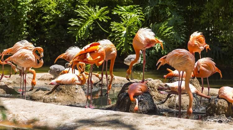 바르셀로나 동물원 입장권