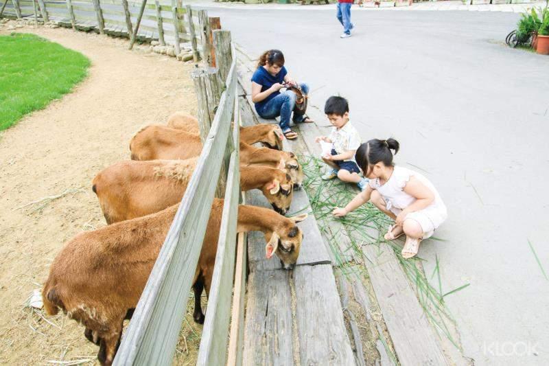 來到綿羊生態區餵食小羊,近距離與動物互動