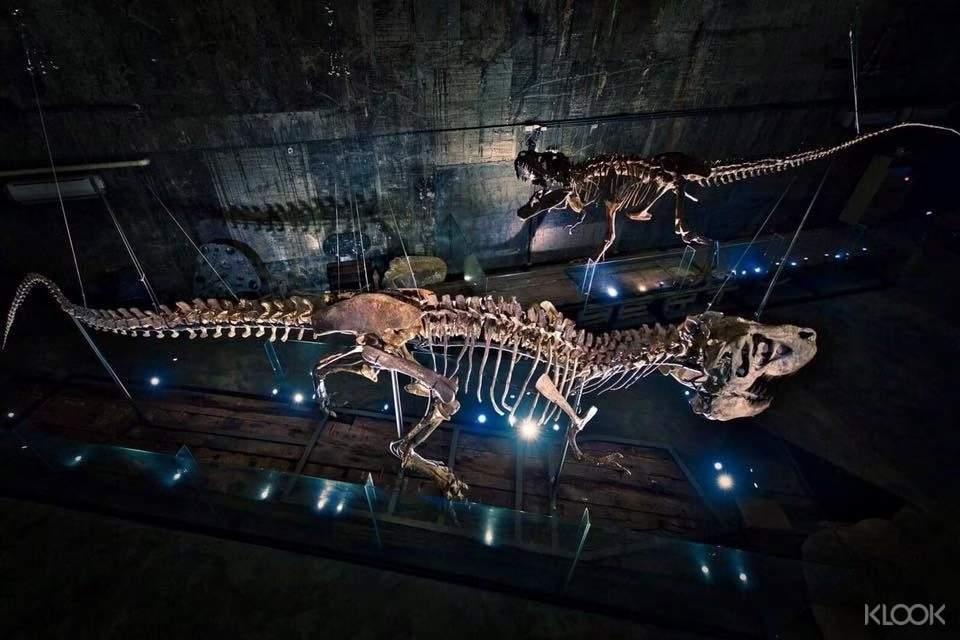 全世界僅有出土8隻暴龍化石中,完整度85%名列全球第二!