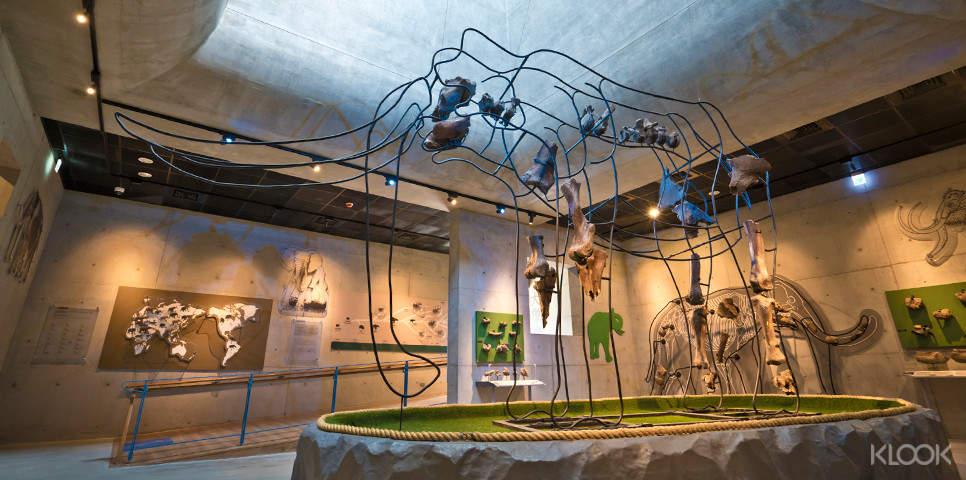 欣賞以工藝創作手法展現的台灣大象化石,一窺大象不同部位骨骼的解剖奧妙